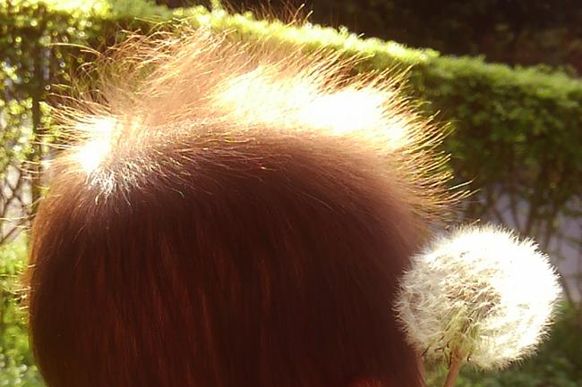 綿毛の画像
