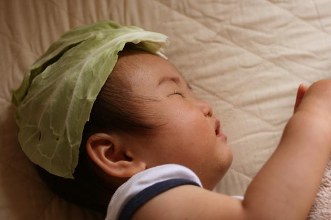 頭にキャベツを被って眠るナツ