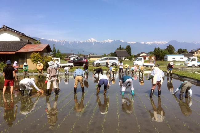 みんなで田植えをする風景